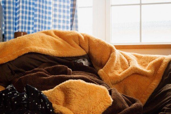 毛布に隠れるマルプーはる
