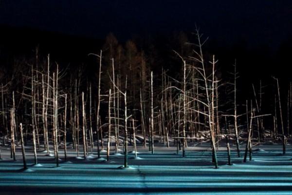 青い池ライトアップin冬の美瑛