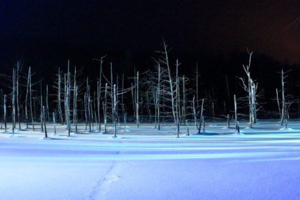 冬にライトアップされた北海道美瑛町の青い池