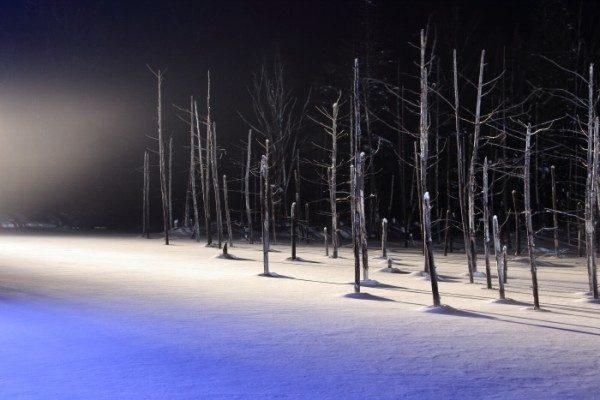 北海道美瑛の青い池ライトアップ
