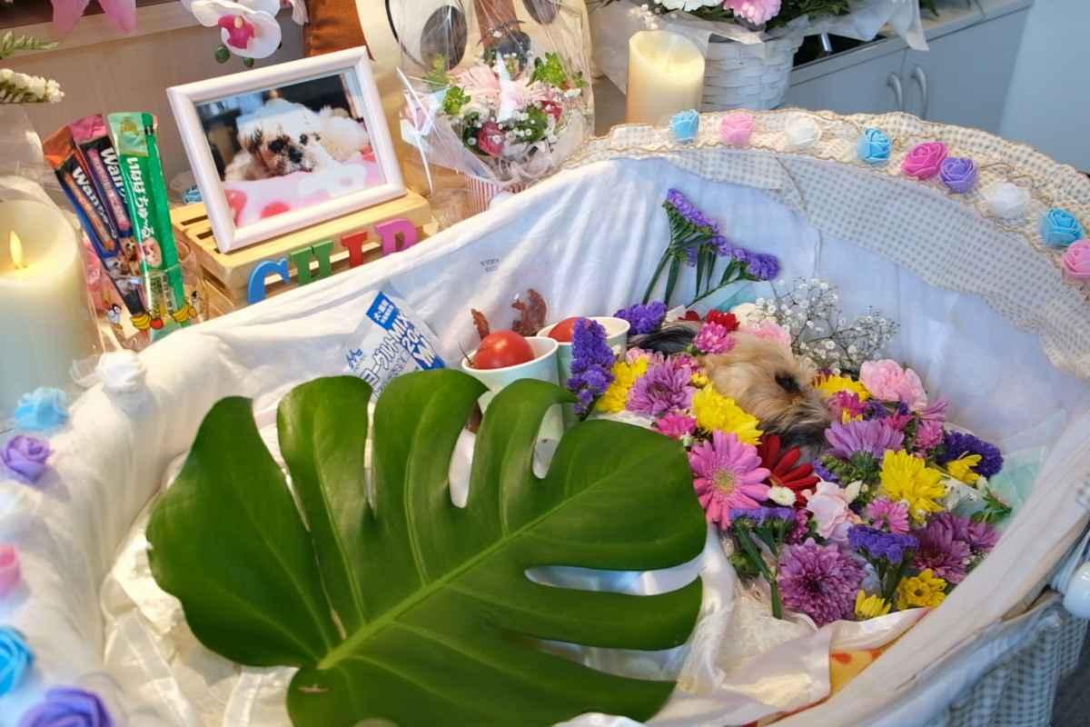 シーズーチップのお葬式
