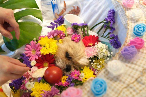 祭壇でお花に囲まれたチップ